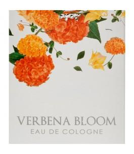 Verbena Bloom