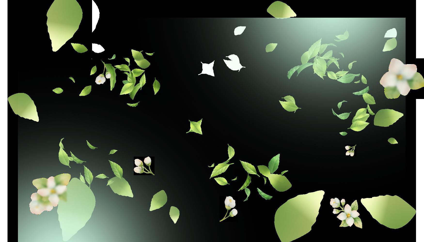 ipa_hojas2-2